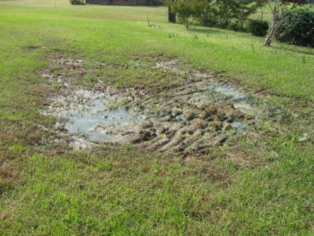 Why Do Septic Tanks Overflow?